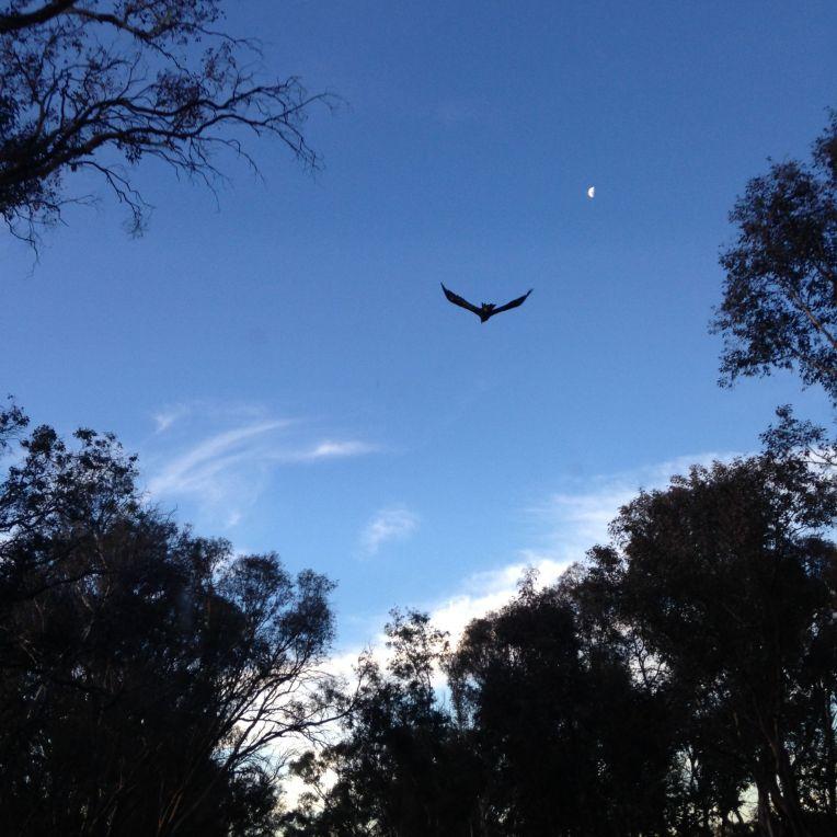March a massive bird of prey