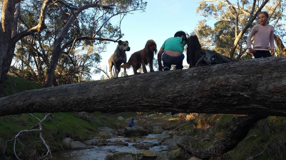 September dogs on log again