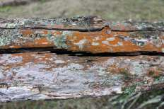 rusty log